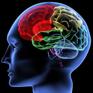 What-is-NLP-Page-Photo-Coloured-Brain
